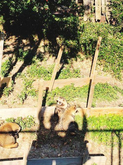 🙆♂️ 🙆♀️ Aichi,japan Zoo Tanuki Animal