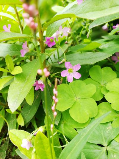Side flower Leaf Flower Nature Plant Green Color Growth Beauty In Nature Outdoors Summer Freshness Day Fragility Close-up Pink Color No People Flower Head