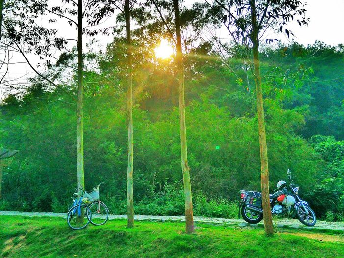 Transportation Mode Of Transport Land Vehicle Tree Bicycle Grass Green Color Motorcycle Leisure Activity Lifestyles From My Point Of View EyeEm Taking Photos Hi! No People Tree Trunk Cycle Sun Sunlight Tranquil Scene