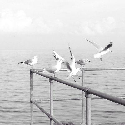 Beach time near Copenhagen EyeEm Birds Birds In Flight