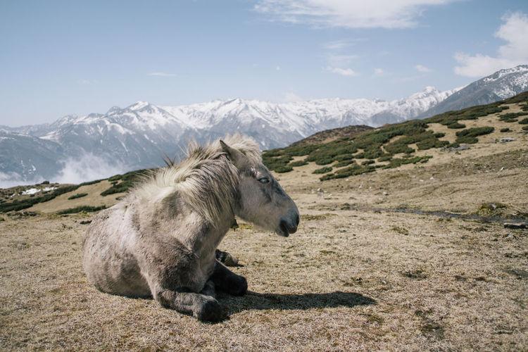 Horse sitting on mountain