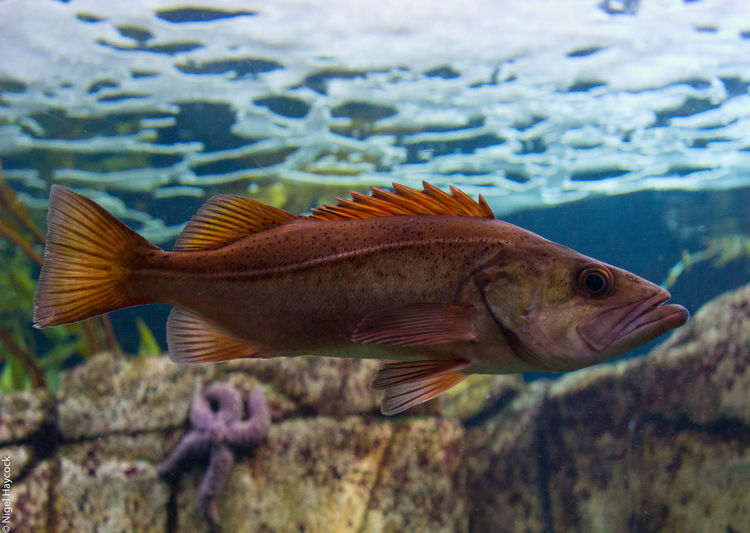 Animal Animal Themes Animals In The Wild Beauty In Nature Close-up Day Fish Nature No People One Animal Outdoors Underwater Water