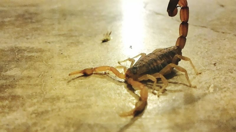 Taking a chance in this pic Scorpion Nature Photography Nature_collection Risky Shot Risktaker