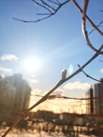 Day No People Sky Nature Outdoors Sunlight Sun Beauty In Nature