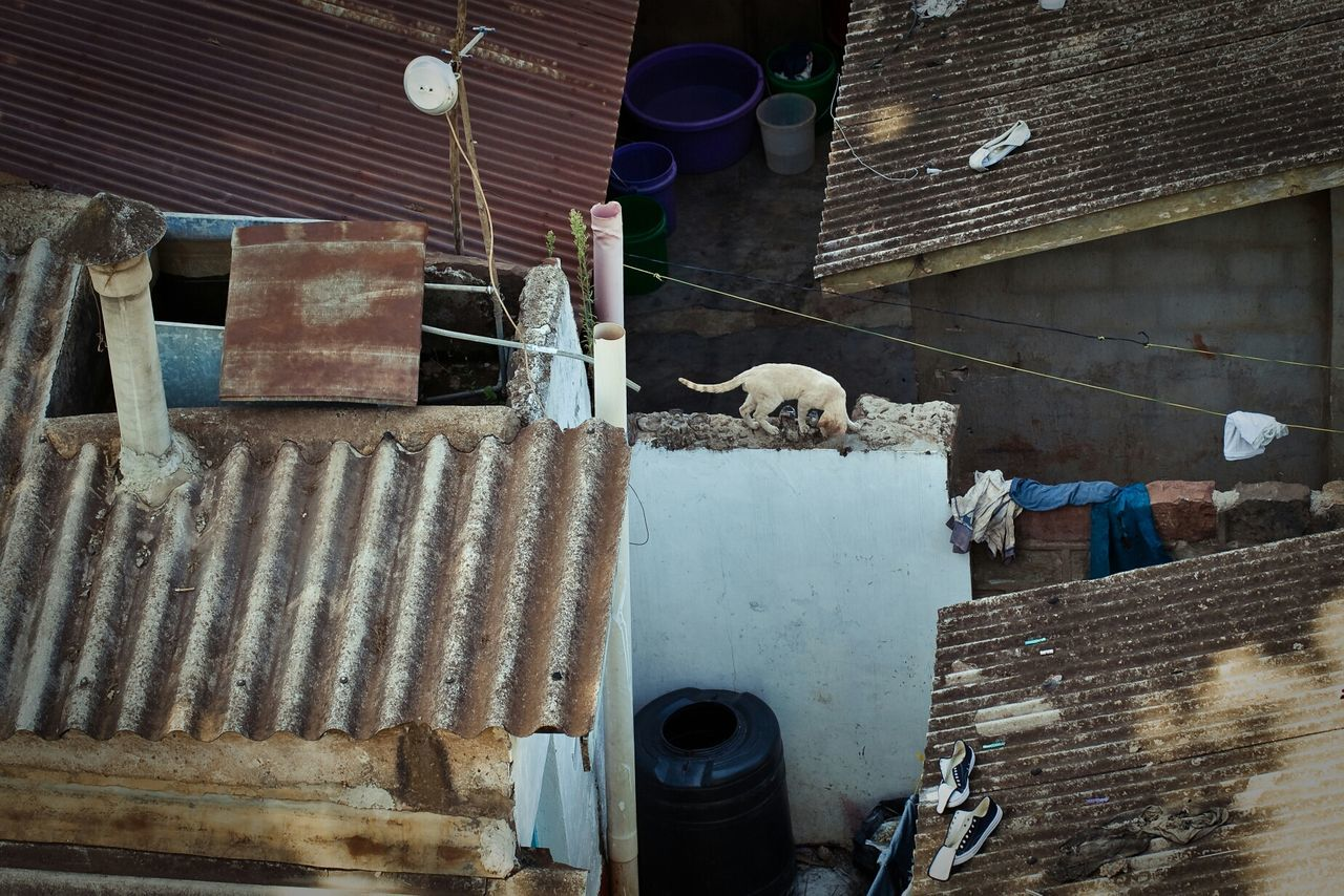 High angle view of stray cat on retaining wall amidst huts