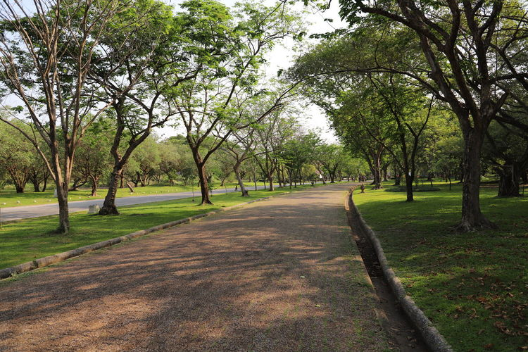 View of footpath in park