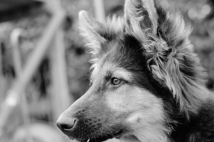 Dog One Animal Animal Themes Focus On Foreground Domestic Animals Pets Mammal Close-up Day Outdoors No People Nature