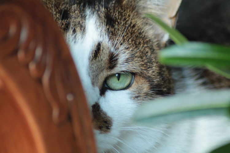Domestic Cat Pets Domestic Animals Looking At Camera Close-up Portrait Mammal One Animal Animal Themes Feline No People Outdoors Tabby Cat Day Catlover ♡ Cat Watching Cat Photography Eye4photography  EyeEm Best Shots Eye4photography  Indoors