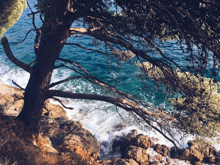 Tree Nature Water Beauty In Nature Sunlight No People Outdoors Tree Trunk Branch Scenics Day