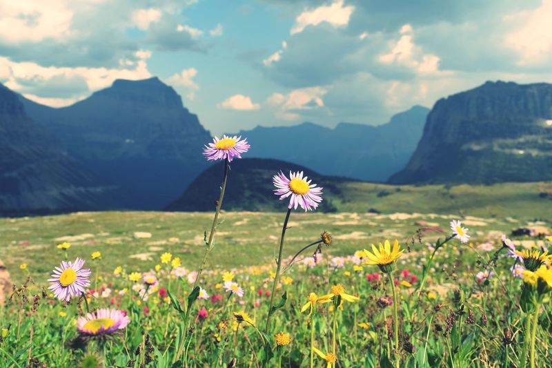 Close-up of flowering plants on field against mountains