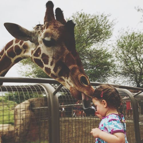 Girrafes Girrafe  Zoo Zoo Animals  Lunch Girl Toddler  Check This Out Kids Kids Being Kids
