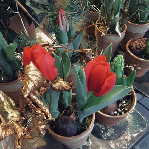 potted flower decoration in christmas time on a table Christmas Flower Market From Above  Golden Tulips Winter Xmas Backgrounds Beauty In Nature Close-up Flower Flower Head Fragility Freshness Golden Leaf Growth Leaf Nature No People Petal Plant Potted Flower Potted Plant Potted Plants Table