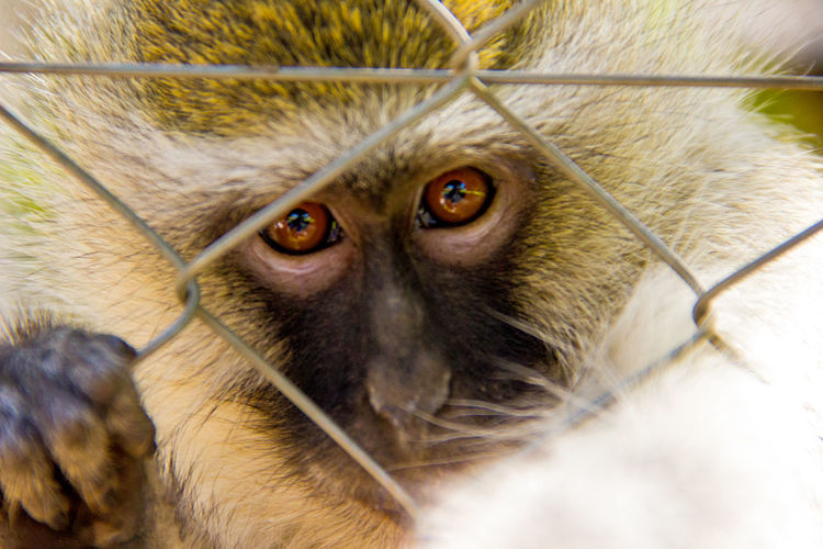 Africa African African Safari Animals Animals In Captivity Animals In The Wild Marmoset Monkey Nature Safari Safari Animals Safari Park Safaripark Wildlife Wildlife Photography
