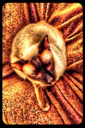 Gutcho, My Cat