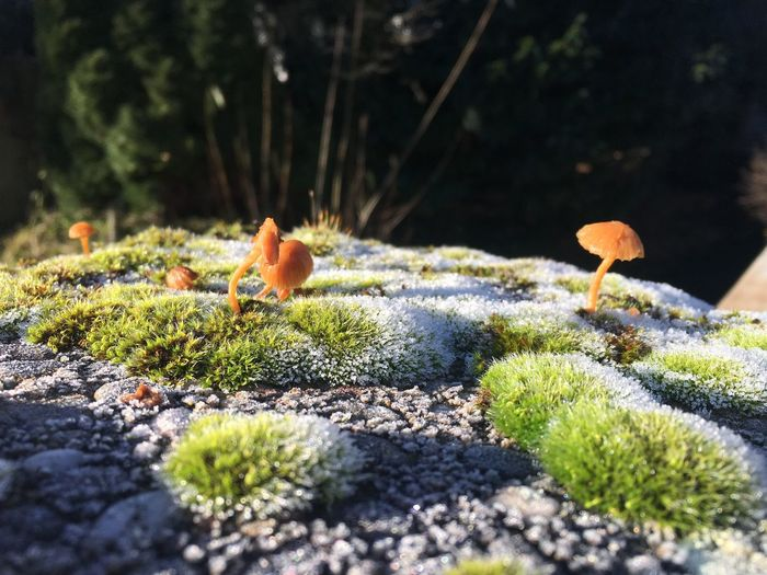 Moss-covered