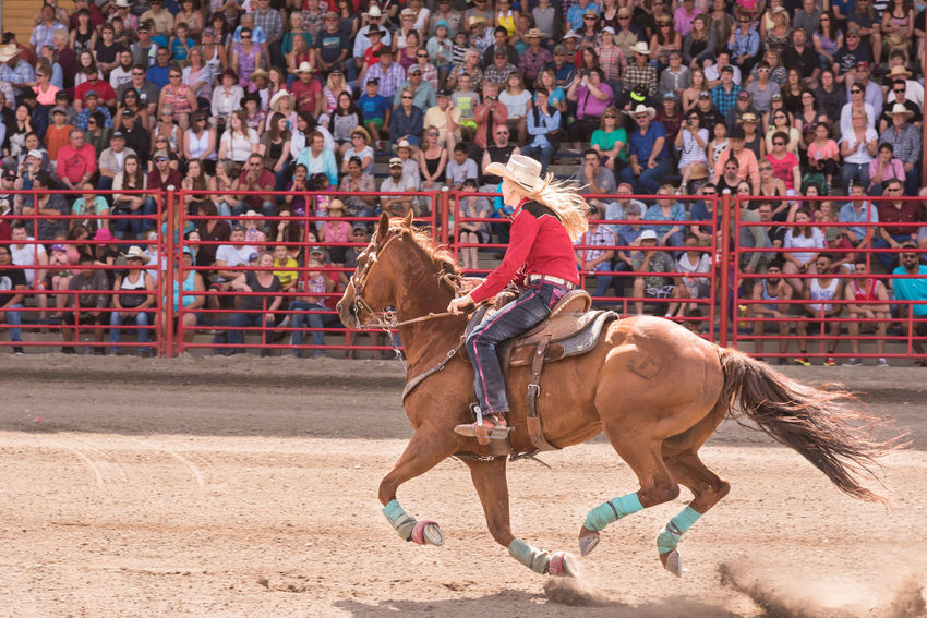 Williams Lake, British Columbia/Canada - July 2, 2016: woman and her horse compete in a barrel racing event at the 90th Williams Lake Stampede, an internationally famous event. 90th Williams Lake Stampede Arena Beautiful Canadian Professional Rodeo Association Horse And Rider July Racing Rodeo Woman Barrel Racing Cowgirl Documentary Editorial  Extreme Sports Fast Galloping Horse Horse Race Outdoors People Professional Rodeo Speed Stampede Stands Summer