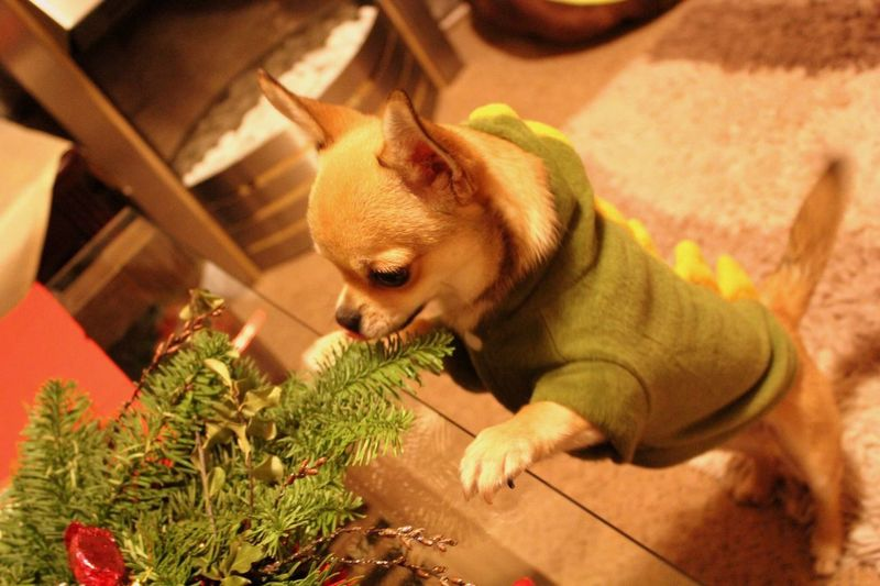 High Angle View Of Dog Standing Near Plant