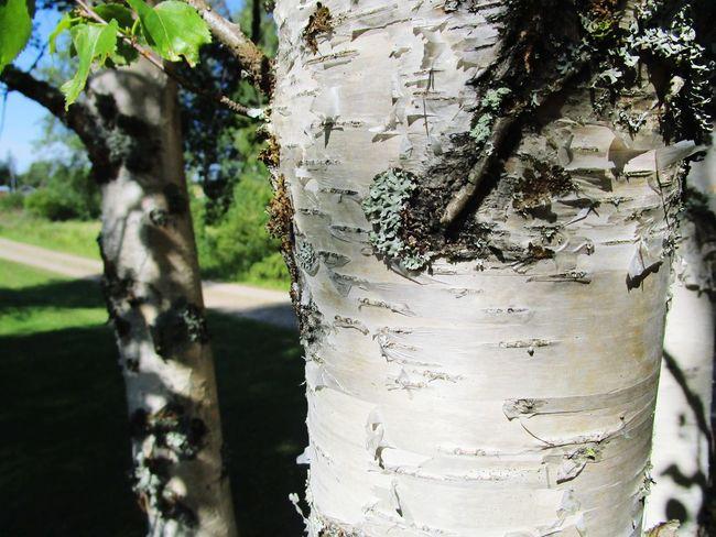 Nature Tree Bark Wood Water Tree Close-up Sky