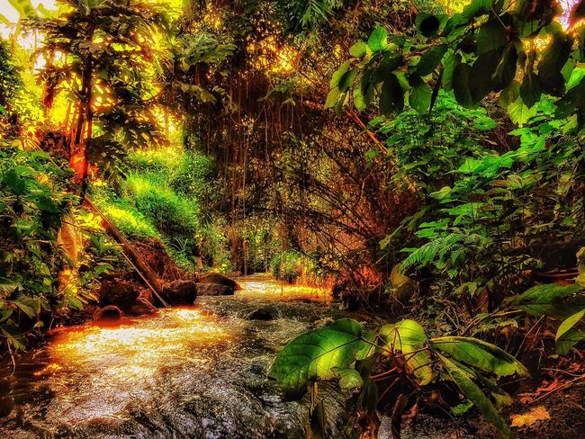 River for life Tree Forest Water Tree Trunk Nature Green