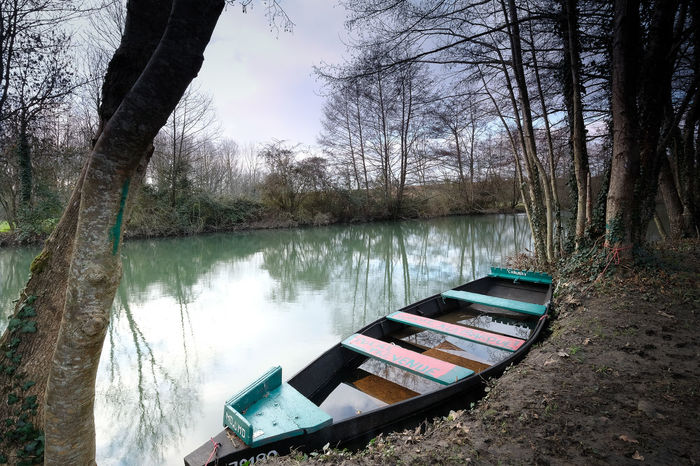 Tree Water Tranquility Lake Plant Nautical Vessel Nature Tranquil Scene No People Reflection Tree Trunk Trunk Branch Scenics - Nature Forest Day Beauty In Nature Non-urban Scene Land Outdoors Rowboat Floating On Water