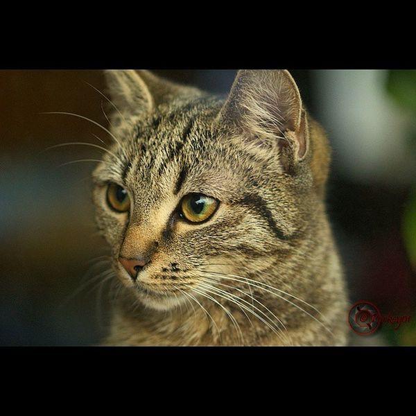 Cat Eye Behind The Window Domestic Domesticcat Animal Pet Marco Katze Auge Augen Hinter Der Fensterscheibe Fenster Hauskatze Tier Haustier Makro Sigma 105 105mm