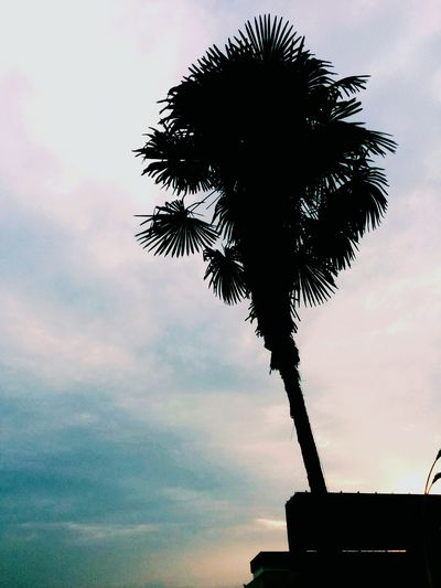 What is your soul tree? Palm Trees Trees