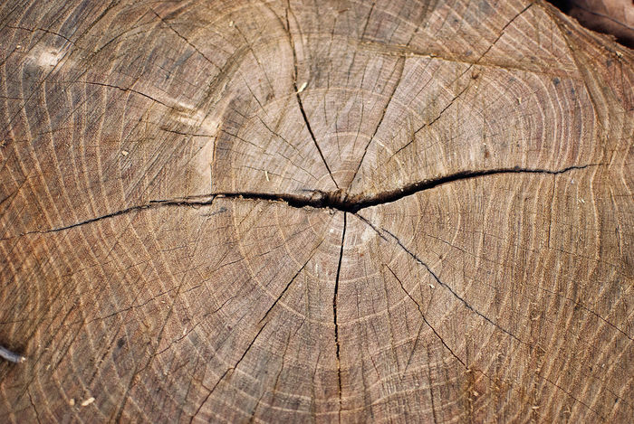 Cut off trunk with detailed view of rings. Backgrounds Blockhead Concentric Cracked Cracked Wood Cross Section Forestry Forestry Industry Textured  Timber Tree Ring Tree Stump Tree Trunk Wood - Material Wood Grain Wood Texture Wooden Spoon Wooden Texture