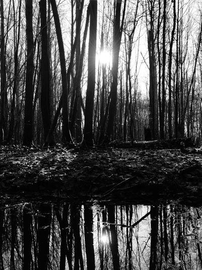 The Dark Forest A Forest Winter Sun Dark Side
