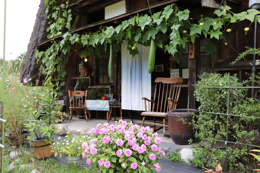 Sirakawagou World Cultural Heritage Flower Collection House Plant Nature_collection Japan