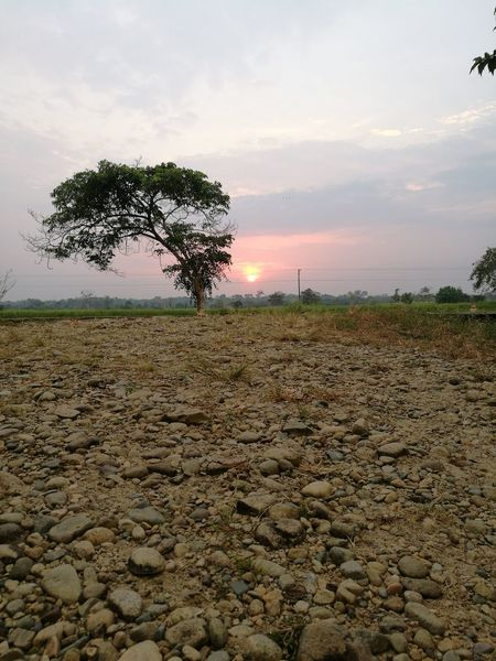 Atardecer Tree Agriculture Rural Scene Field Outdoors Sunset No People