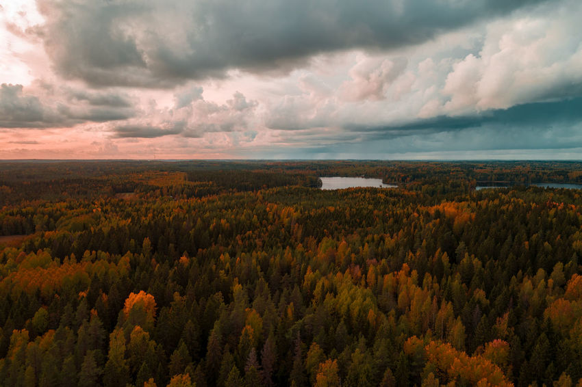 Aerial view from Liesjärvi National Park on an autumn afternoon with sun starting to go down, Finland Aerial Shot Autumn Autumn colors Drone  Finland Tammerkoski Aerial View Beauty In Nature Cloud - Sky Day Dramatic Sky Landscape Liesjärvi Nature No People Non-urban Scene Outdoors Plant Scenics - Nature Sky Sunset Tree