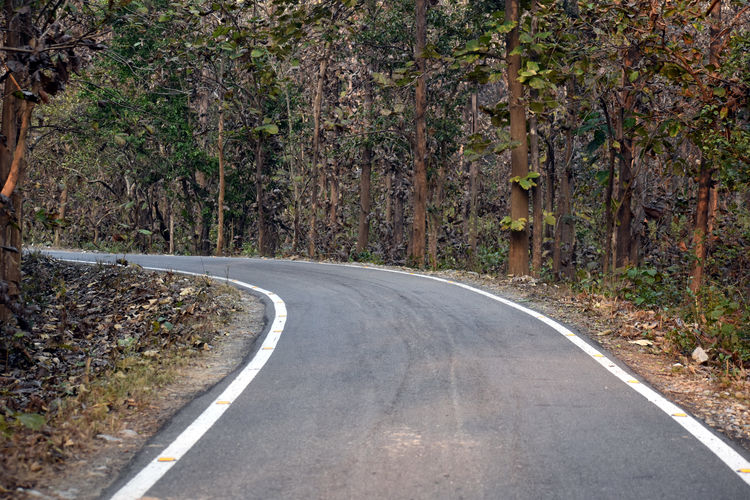 Country road amidst trees in forest