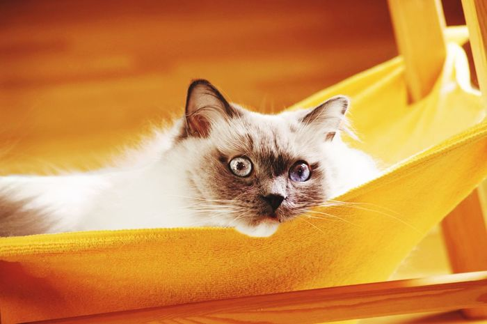 Kitty in hammock Cats Pet Cute Eyes Cute Pets Eye4photography  EyeEm Best Shots EyeEm Gallery Pets Portrait Feline Domestic Cat Looking At Camera Close-up Kitten Persian Cat  Young Animal Animal Eye Tabby Cat Tabby Cat Pet Bed Whisker Siamese Cat Ear Animal Family