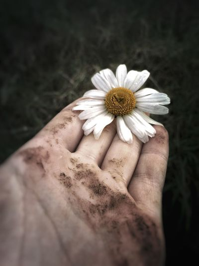 Held • Colossians 1:17 Flower Human Hand Human Body Part One Person Petal Real People Flower Head Fragility Pollen Holding Close-up Lifestyles Nature Leisure Activity Beauty In Nature Women Freshness Black Background Outdoors Day Hand Fingers Daisy Grass Close Up