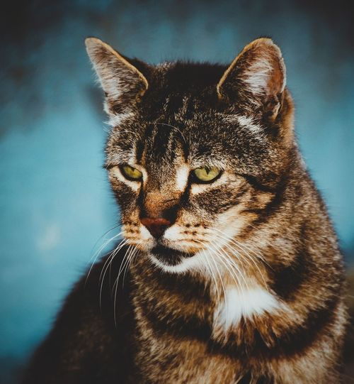 #EyeEmNewHere #eyembestshot #photography #Nature  #EyeEm #portrait #portraitphotography #urbanana: The Urban Playground #EyeEmSelects Analogue Photography EyeEm Best Shots Vintage #JustMe Pets Portrait Colored Background Whisker Close-up Cat Stray Animal
