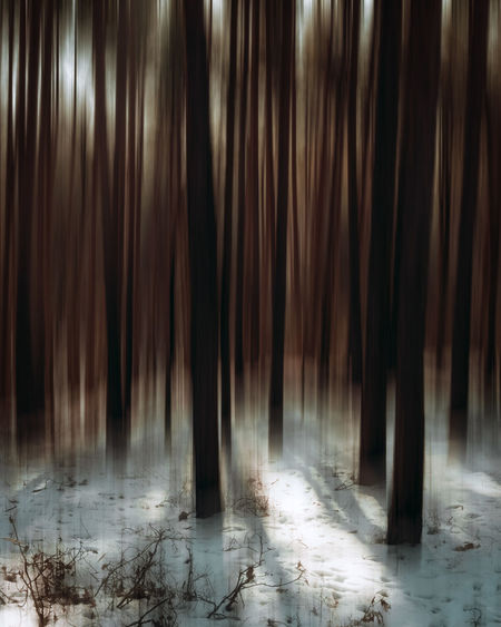 Insomnia Forest Exceptional Photographs Silhouette EueEm Nature Lover Eye4photography  Winter Winter Trees Motion Poland Abstract Photography Tree