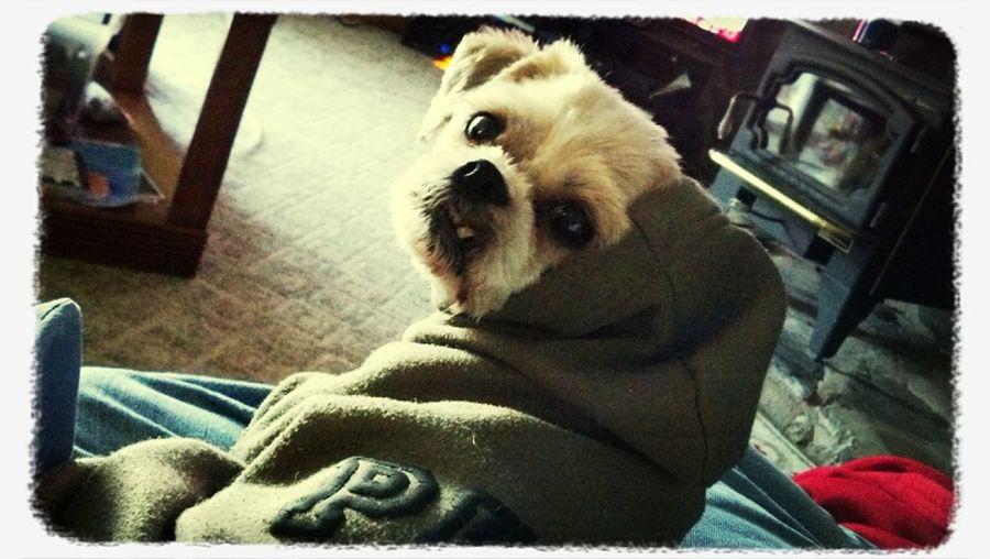 My Hoodie Doggie