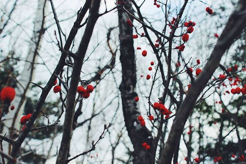 """""""We'll be scraping the sky with your fingertips screaming this is the life we were born for this"""" Photography Photographer Fall Autumn Trees Berrys Bush Myphoto L4l Instagood Landscape VisitNovaScotia Novascotia Red Almostnofilter"""