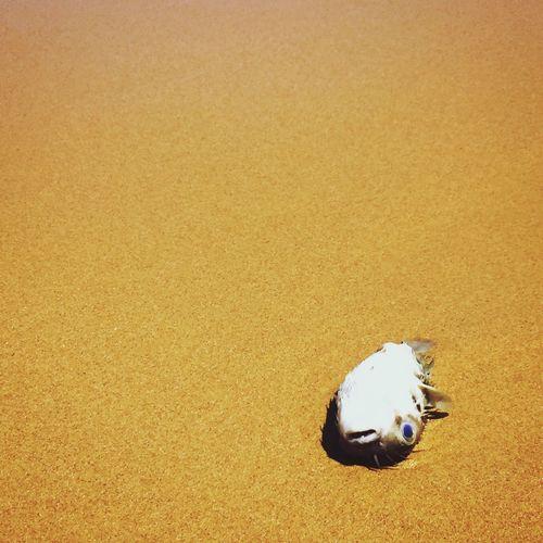 Dead fish at sandy beach on sunny day