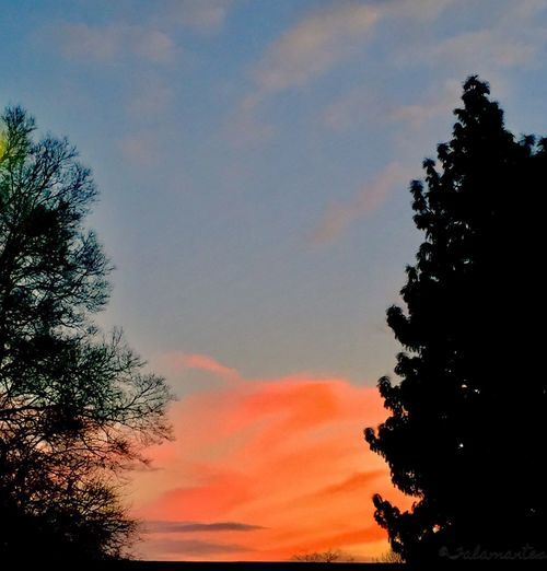Sunset Sky Tree Nature Orange Color Growth Beauty In Nature Silhouette No People Tranquil Scene Cloud - Sky Tranquility Low Angle View Scenics Outdoors Day
