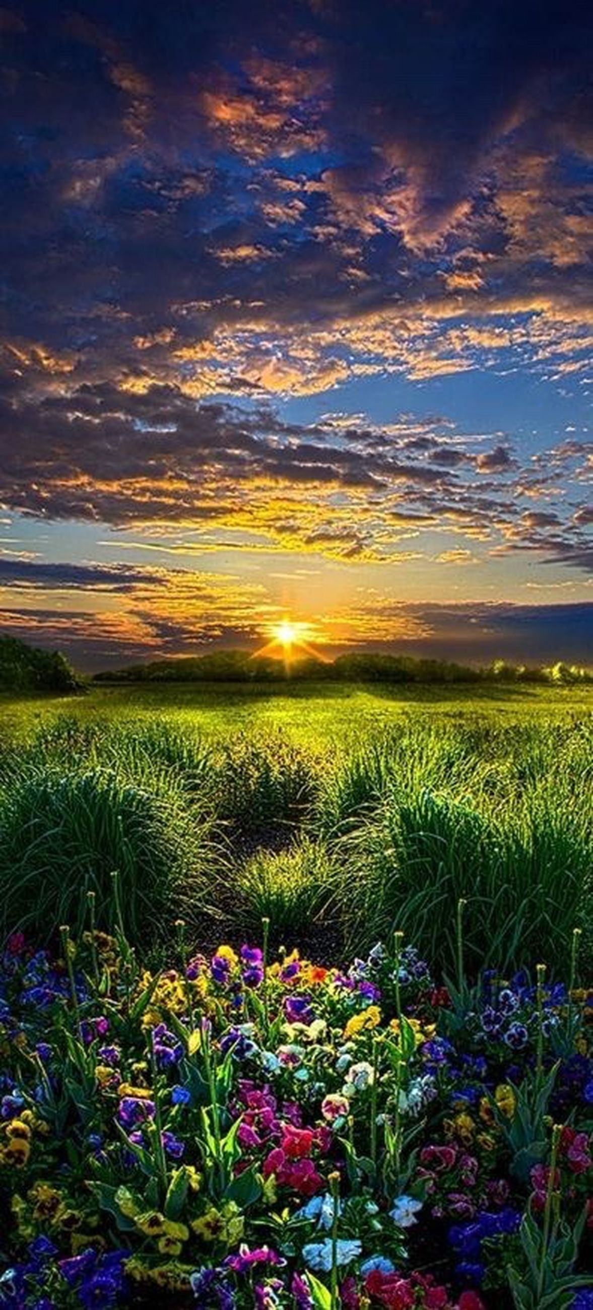 beauty in nature, flower, nature, multi colored, scenics, plant, field, rural scene, landscape, outdoors, sunset, travel destinations, beauty, cloud - sky, growth, horizon over water, agriculture, no people, sky, sea, flower head, beach, close-up, single tree, day