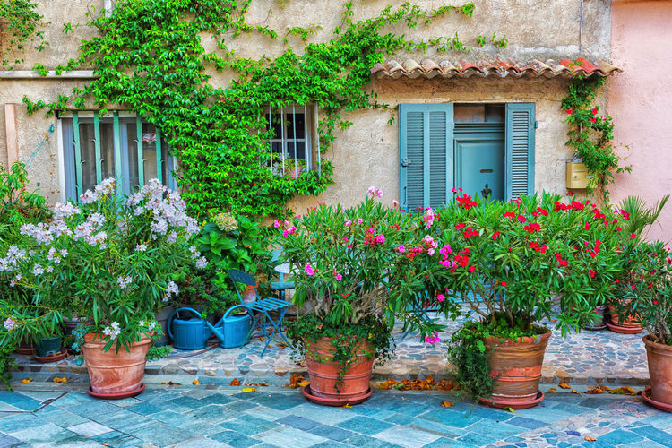 picturesque house front in Provence, France Building Building Exterior Façade Flower Pot Flowers House Mediterranean  Oleander Overgrown Picturesque Provence Provence Alpes Cote D´Azur South France Village Wall
