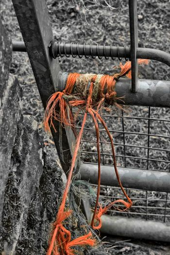 High angle view of orange tied up on metal fence