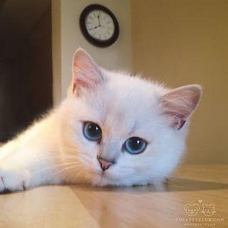 رمزيات  Cat رمزياتBBM صور رمزيات_منوعه Photo♡ Cartoon Photo صور_رمزية