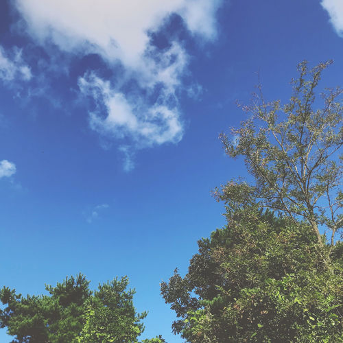 Blurry Tree Sky