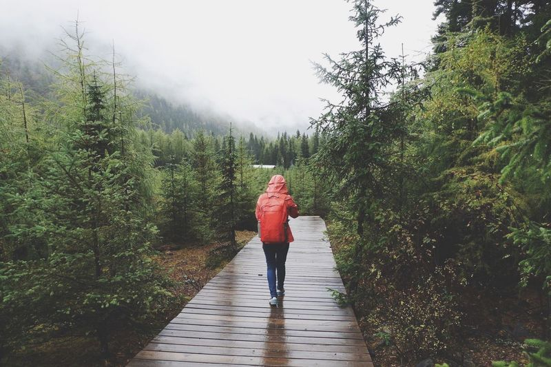 Rear view of woman walking on wet boardwalk amidst trees in forest