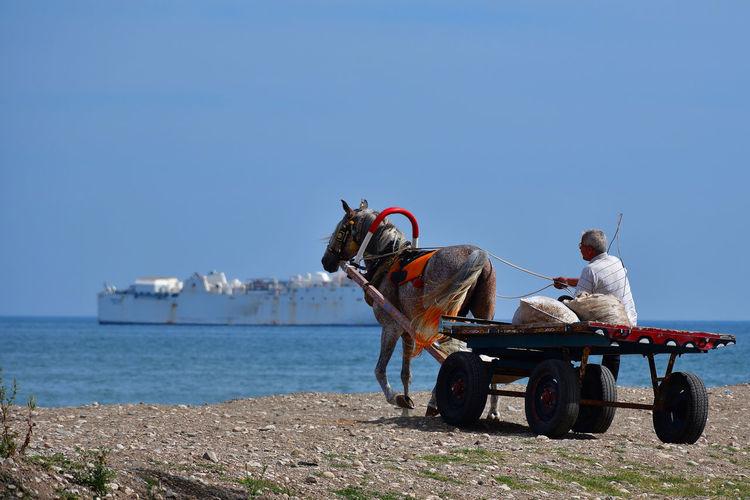 Man sitting on horse cart against sea
