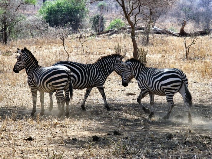 Snapshots of wildlife in Tanzania Animals Wildlife Nature_collection EyeEm Nature Lover The Great Outdoors With Adobe