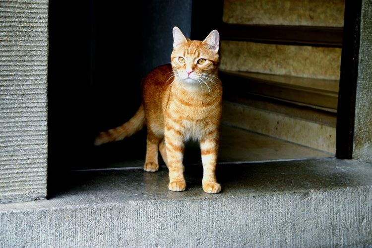Close-up of ginger cat looking away