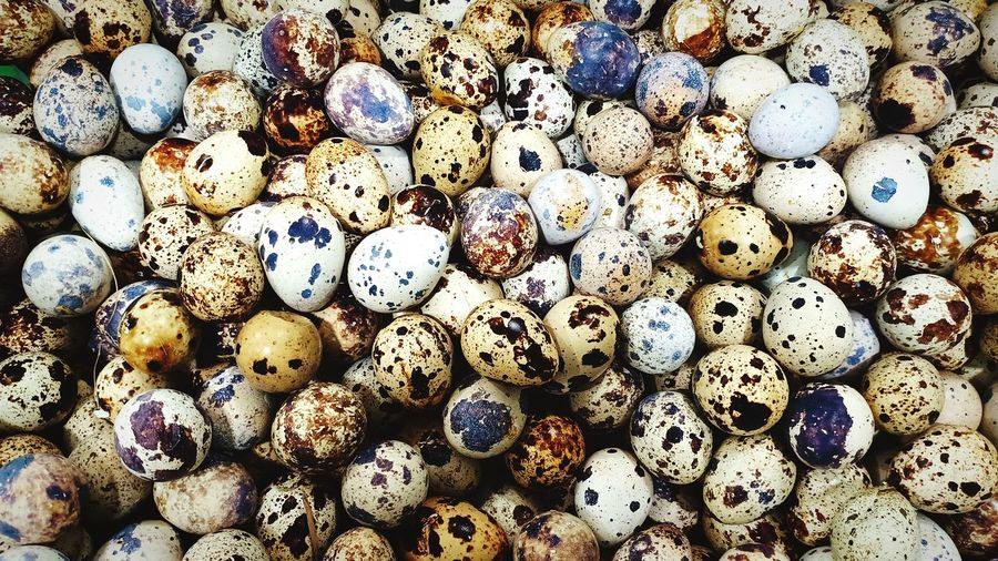 Abstract texture patterns from rows of quail eggs